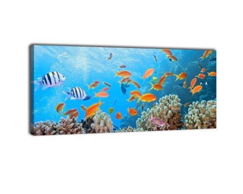 wandmotiv24 Leinwandbild Panorama Nr. 65 Unterwasserwelt 100x40cm, Keilrahmenbild, Bild auf Leinwand, Kunstdruck Riff Fische Koralle