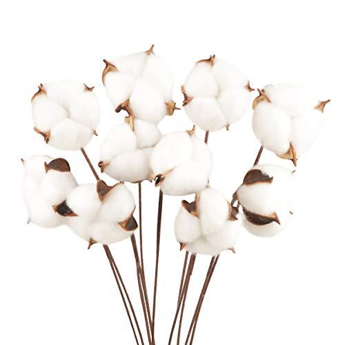 10 Pcs Flores Artificiales Decoracion Blanca Flores Algodón Secas Tallo Largo ,Simulación de Natural y de Estilo Original , para decoración de Jarrones Hogar Hogarcasa de Campo Bodas Fiestas