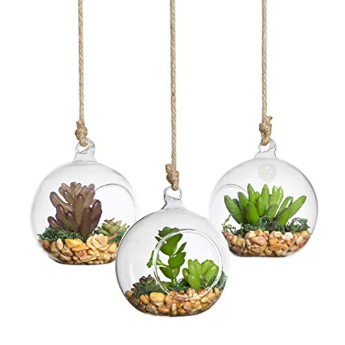 SunGrow 3 Hanging Glass Terrariums by Spherical Air Plant Orb - Handmade, Heat-Resistant Glass - Create Refreshing Atmosphere in Terrace Garden (Air Plant Sky Orb (3 Pack))