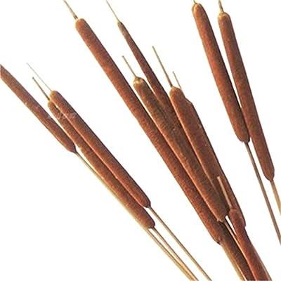 "Dongliflower 40 Stems,Dried Natural Cattails Jumbo 24"""