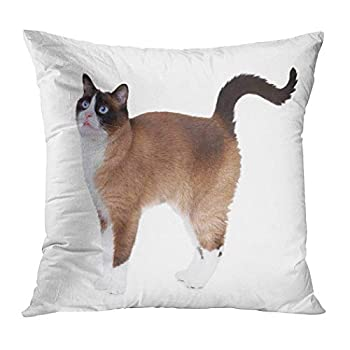 Ajckly Cute Pillow Case Snowshoe Cat Excited Showing Throw Pillow Cover Soft Print Cushion Cover Decor Pillowcase for Sofa Bed Car Chair 20x20 Inch