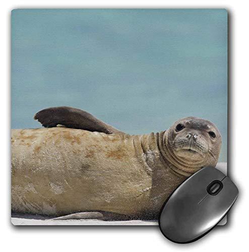 FETEAM Noroeste de Las Islas Hawaianas Midway Atoll Monk Seal Rebec California Jackrel Alfombrilla de ratón