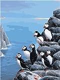 Meecaa - Kit de pintura por números para pájaros y patitos feos para adultos, principiantes, pintura al óleo, 40,6 x 50,8 cm (pájaro, enmarcada)