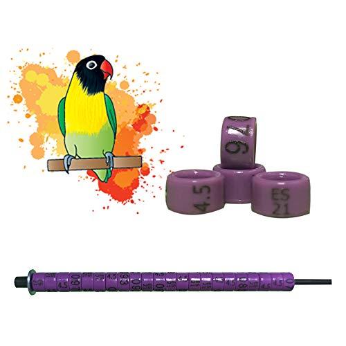 nestQ 50 Anillas Agapornis 2021 Color Violeta Federativo Policromo Grabado Laser Cerradas 4.5 Milimetros Numeradas con Año Marcado