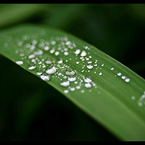 Shower Raindrops