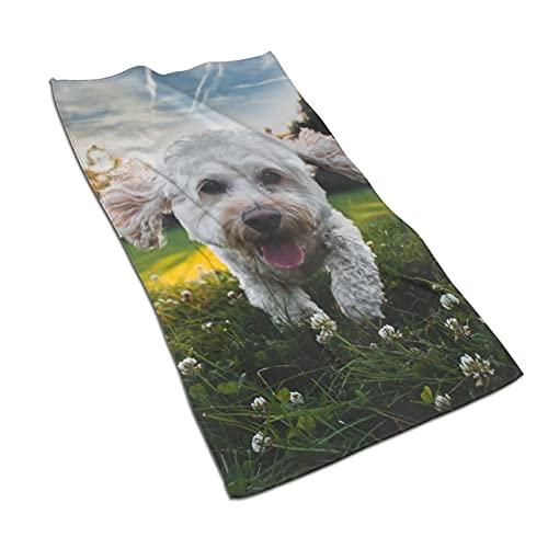Toallas de baño para cachorros bichon frise toallas de baño de secado...