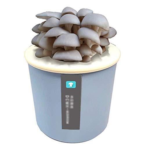 DRSM Garden Outdoors Kit de Cultivo de Hongos ostra, Micro Semillas de Hongos, esporas, engendro de Morchella Elata Bonsai para Interiores, Regalo de Bricolaje para