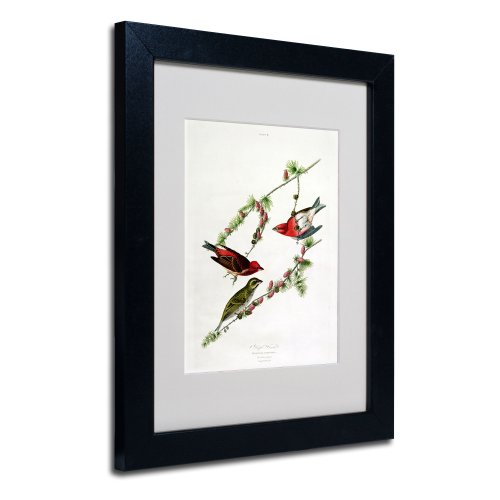 Purple Finch Matted Artwork by John James Audubon with Black Frame, 11 by 14-Inch