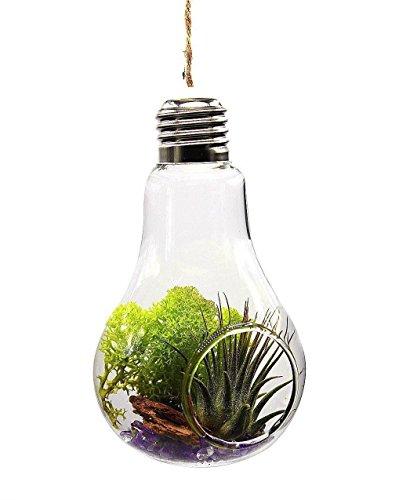 Lumanuby 1x Glühbirne Vase as Glas Bulb Hydroponic Container für Blumen/Micro Landschaft Zuhause/Hochzeitsdekoration (1 Öffnung)