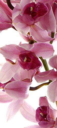 Fotobehang FTNv2900 fotomurals orchidee