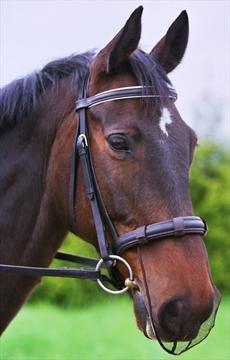 Equilibrium Products - Museruola per cavallo a rete, nero (nero), Cob/Horse