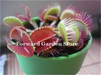 120 stuks gemengde Vleesetende planten Potplanten Flycatcher Bonsai Zonnedauw Table Garden Venus Flytrap Planting straling: 12