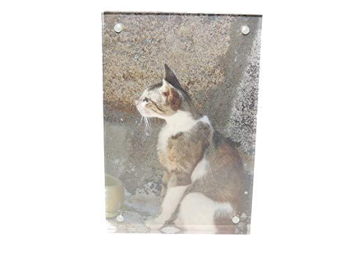 PaLi rahmenloser Bilderhalter aus hochwertigem Acryl, Bilderrahmen, 1 Stück, 10 x 15 x 2 cm