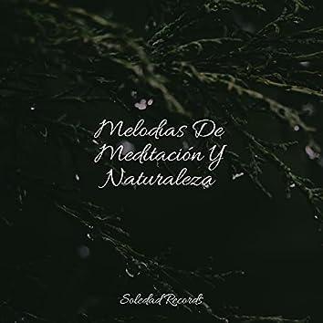 Melodías De Meditación Y Naturaleza