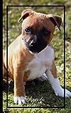 AGENDA 2021: Agenda 'Chiot American Staffordshire Terrier'. Semainier. Calendrier annuel, mensuel et hebdomadaire. Emploi du temps. Janvier à décembre 2021. 13x21cm. 139 pages.