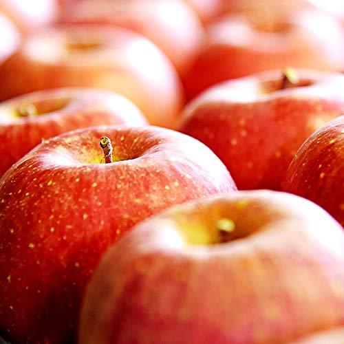 山形県産 準秀品 サンふじりんご 5kg