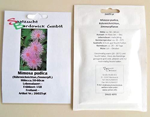 Rührmichnichtan Sinnpflanze Mimose Springkraut Blumensamen für ca. 10 Pfl. Mimosa Blumensaat