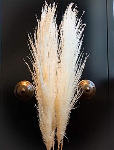 Lilianfeld® Pampasgras 3er Set XL - Natürlich getrocknetes Pampasgras beige/blonde - Hohe Qualität - Made in Peru - Interior-Trend 2020
