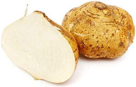 Jicama Mexican Yam Bean Pachyrhizus Over item handling Erosus Cheap SALE Start - Sẽẽds 5