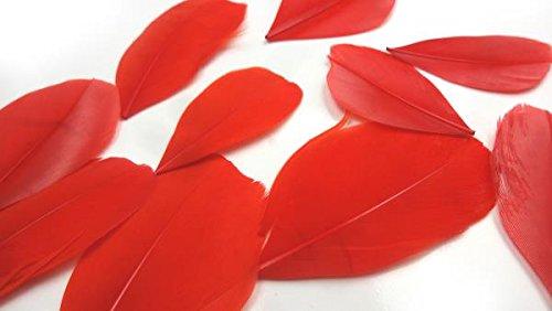 HARU雑貨 フェザー 羽根 ガチョウ レッド 赤 10枚セット 染め 装飾 素材 手芸 ピアス ネックレス コサージュ