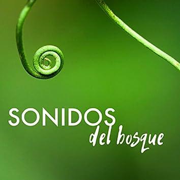 Sonidos del Bosque - Música Ambiental para Serenidad, Meditar, Ejercicios Yoga y Estudiar