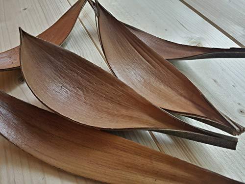 Der-kleine-Dekoladen 25x Kokosblatt Kokosschale Palmen Blatt Palmenschale Palmenblatt Naturdeko ca.27-40cm
