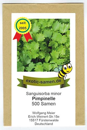 Pimpinelle, Gartenpimpinelle - Bienenweide - kleiner Wiesenknopf - Sanguisorba minor - 500 Samen