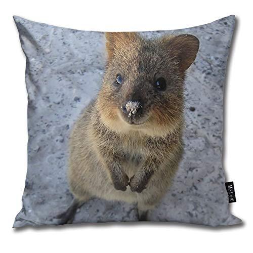 BLUETOP Quokka Kissenbezug 45,7 x 45,7 cm Winter Urlaub Bauernhaus Baumwolle Kissenbezug Dekoration für Sofa Couch