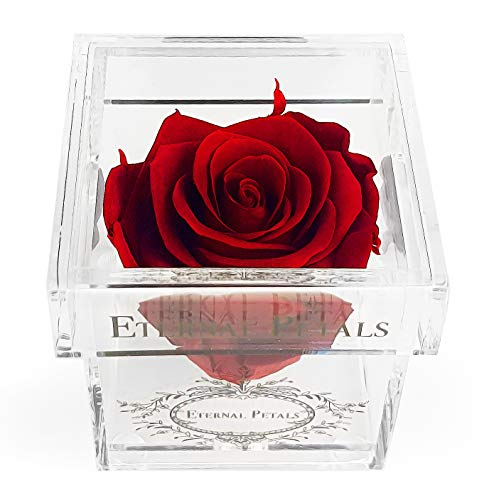 Eternal Petals A Rose That Lasts A Year - The Perfect Unique Gift for Women and Men, A Birthday Gift - White Gold Solo (Deep Red)