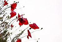クロスステッチキット初心者大人の子供がパターンで刻印されたクロスステッチキットおかしい花DIY11カラット印刷済み生地刺繡工芸品針仕事キット芸術装飾ギフト-16×20インチ