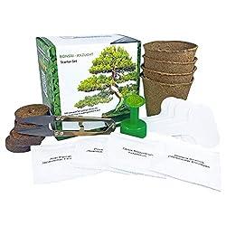SeedPal - Bonsai Starter Kit - Anzuchtset inkl. E-BOOK- Züchte deinen eigenen prächtigen Bonsaibaum. Das nachhaltige Geschenkset für Pflanzenliebhaber & jeden Anlass. INDOOR & OUTDOOR