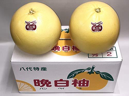 晩白柚  八代特産 ばんぺいゆ 2玉入 訳あり Lサイズ