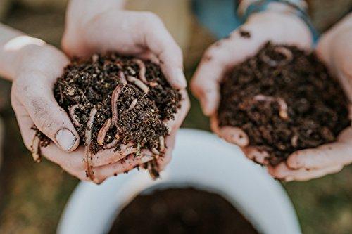 WORMSYSTEMS Startpopulation mit Vitale Kompostwürmer in Substrat (6 Liter) für Wurmkisten und Wurmkomposter