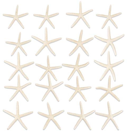 Jangostor 20 PCS Starfish 2.5-4 Inch Ocean Beach Starfish-Natural Seashells Starfish Perfect for Wedding Decor Beach Theme Party, Home Decorations,DIY Crafts, Fish Tank