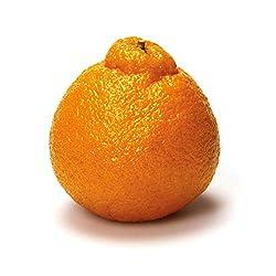 PRODUCE Sumo Citrus