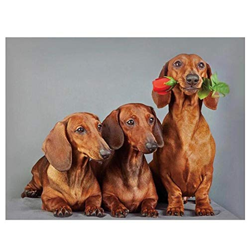 5D Bricolaje Pintura De Diamante Digital Perros Animales Encantador Mosaico De Rosas Taladro Redondo Completo Punto De Cruz Arte Sala De Estar Decoración Del Hogar Regalos 40×50cm