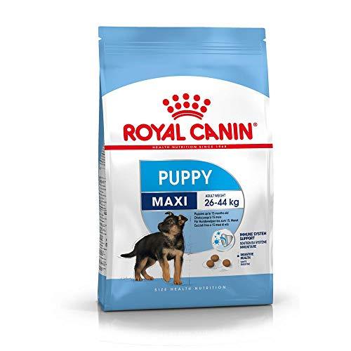 Royal Canin–Maxi Junior, Cibo per Cani di Razza Grande