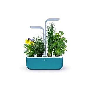 VERITABLE - 4 Paquetes de Lingot® Acelgas BIO - Compatible con ...