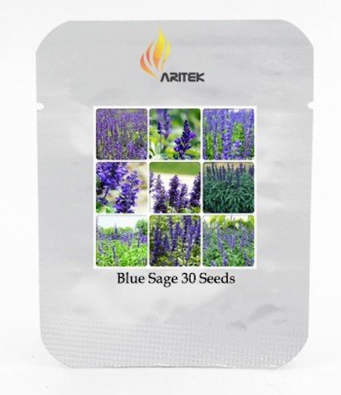子供達叫ぶ計算可能2018 Hot Heirloomビクトリアサルビアファリーナセアセージ多年生花種子、プロフェッショナルパック、30種子/パック、非常に美しいサルビアE3435