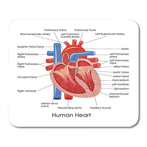 Alfombrillas de ratón anatómicas del diagrama anatomía del corazón humano cuerpo órgano del músculo cardíaco alfombrilla de ratón para computadora portátil, accesorios de computadoras de escritorio mi