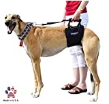 GingerLead Dog Support & Rehabilitation Harness with Stay on Straps - Tall Male Sling - Ideal for Aging, Disabled, or Injured Dogs Needing Assistance with Their Balance and Mobility