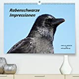 Rabenschwarze Impressionen - meike-ajo-dettlaff.de via wildvogelhlfe.org (hochwertiger DIN A2 Wandkalender 2021, Kunstdruck in Hochglanz)