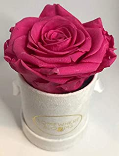 Somewhere Blooms Eternity Rose, Suede Gift Box, Preserved Fresh Flower, Long Lasting, Perfect Luxury Gift for Mother's Day, Birthday, Anniversary (Fuschia, White Box)