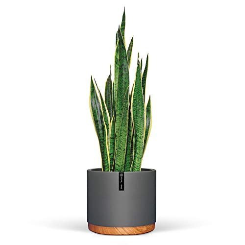 6 Inch Pot Perfect for Indoor Planter Pots- This Ceramic Planter are Indoor Pots for Plants with Drainage Good as Orchid Pots with Holes- 6 in Planter Used as Ceramic Flower Pot - Plant Not Included