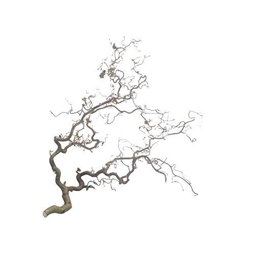 Korkenzieherast (ca. 60 cm lang) mit Sisalseil - Vogelsitzast | Vogelzubehör | hängende Deko | Vogel-AST | Voliere, Natur-Äste Wellensittiche