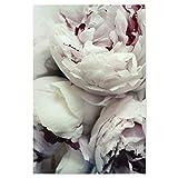 artboxONE Poster 30x20 cm Prints & Kunstdrucke Natur Pfingstrosen - Bild pfingstrosen Rosen Blumen