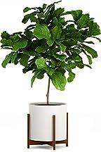 large pot for plants