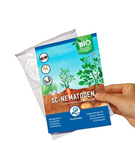 Plantura SC-Nematoden gegen Maulwurfsgrillen, Wiesenschnaken & Erdraupen, wirksam & nachhaltig, 50 Mio