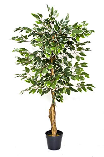 GreenBrokers Variegated Tree 140 cm Árbol de ficus Artificial variegado, Planta en Maceta