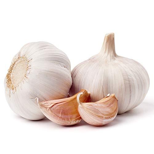 Hankyky Knoblauchknolle zum Pflanzen und Züchten Ihres EIGENEN Knoblauchs ODER ideal zum Essen und Kochen von 100 Knoblauchsamen/Packung